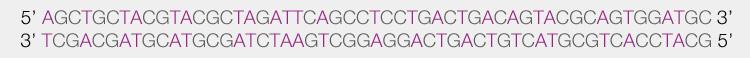 Séquence ADN