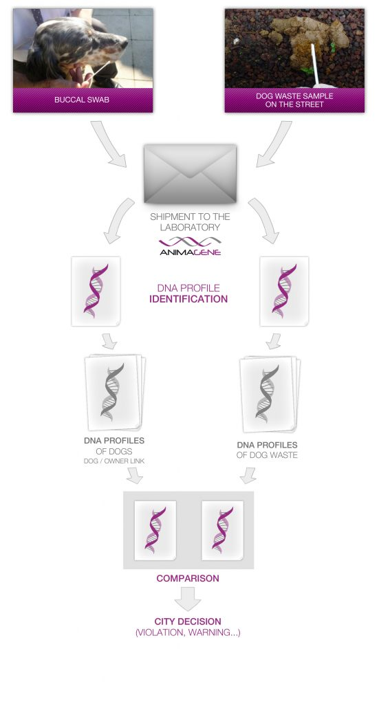 Process Hygène - DNA profile identification