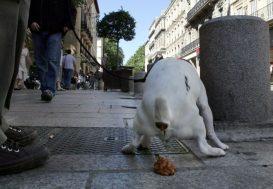 Le fichage ADN canin autorisé par la cour administrative d'appel de Marseille