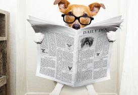 Les déjections canines, l'habitat de nombreux parasites