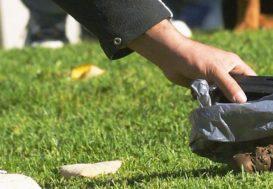 Andorre, fichage ADN des chiens obligatoire pour lutter contre les déjections canines